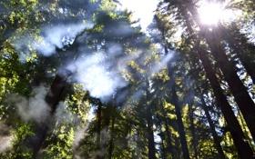 Обои лес, небо, солнце, свет, деревья, пейзаж, природа