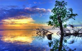 Картинка вода, закат, отражение, река, дерево