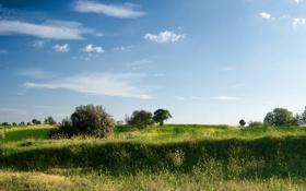 Картинка поле, лето, деревья, поляна, растения, луг, травы