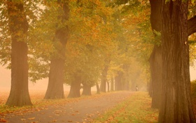 Обои осень, деревья, туман, парк, настроение, дымка, прогулка