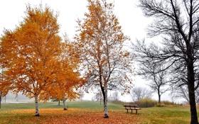 Картинка листья, осень, скамья, деревья, небо, парк