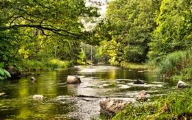 Картинка камни, течение, трава, лето, лес, зелень, речка