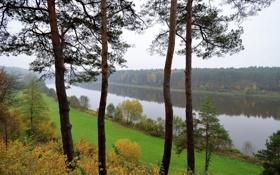 Обои лес, река, Литва, деревья., Lithuania, Bristonas