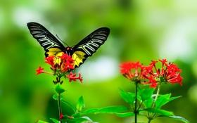 Обои листья, цветок, насекомое, растение, бабочка, крылья