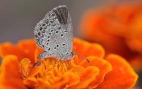 Обои цветок, бабочка, насекомое, мотылек