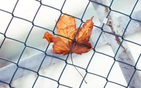 Картинка фон, забор, лист