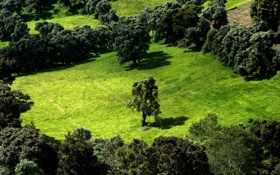 Обои landscape, forest, trees, green