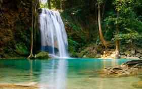 Обои дно, камни, рыбки, деревья, водопад, корни, листва