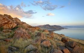 Картинка трава, озеро, камни, берег