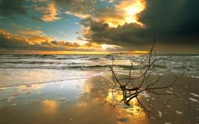 Обои море, пляж, закат, тучи, ветка