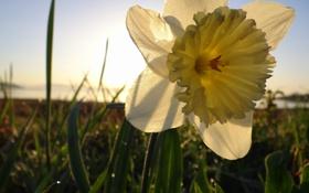 Обои жёлтый, Цветок, flower