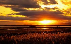 Обои поле, облака, закат, озеро, стебли, горизонт, желтый небо