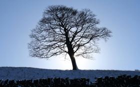 Картинка рассвет, 1920x1200, Canon EOS 350D DIGITAL, зимние обои, дерево, картинки для рабочего стола, заборы