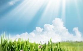 Картинка лето, трава, солнце, цветы, природа, зеленый