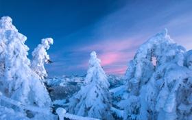 Обои зима, снег, деревья, ель, хвойные, заснежено