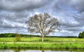 Картинка поле, лес, небо, трава, облака, река, дерево