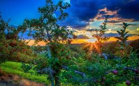 Картинка закат, фото, Небо, Природа, Деревья, Сад, Рассвет