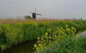 Обои небо, цветы, канал, ветряная мельница