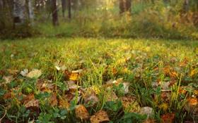 Картинка капли, осень, трава, роса, листья, солнечные лучи, природа