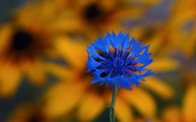 Картинка цветок, лепестки, луг, экзотика