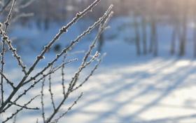 Обои иней, снег, ветки, Зима