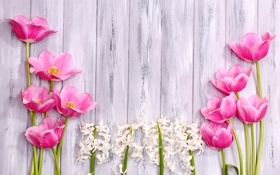 Картинка тюльпаны, tulips, wood, гиацинты, pink, цветы