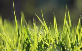 Обои зеленое, трава, весна, радостно