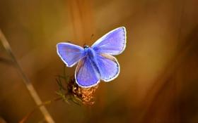 Обои ветка, бабочька, Love summer