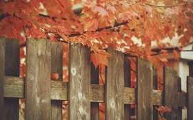 Картинка листья, осень, забор