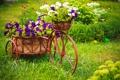 Картинка цветы, велосипед, flowers, петуния, Biking, Petunia