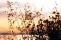 Картинка лето, небо, природа, берег, ромашки, Травинки