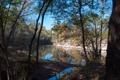 Картинка лес, осень, деревья, протока, небо, река