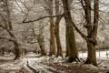 Картинка дорога, снег, деревья, природа