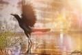 Картинка трава, вода, солнце, брызги, крылья, птичка, Bird