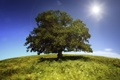 Картинка небо, трава, солнце, пейзаж, природа, дерево, grass