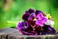 Картинка цветы, пень, букет, размытость, анютины глазки