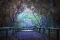 Картинка дорога, природа, парк