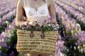 Картинка лето, девушка, цветы, корзина