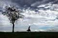 Картинка поле, небо, девушка, дерево
