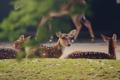 Картинка животные, шерсть, олени