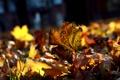 Картинка осень, много, листва, макро