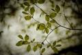 Картинка листья, обои, ветки, природа, ветви, растения, фон