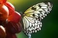 Картинка лето, природа, бабочка, виноград, насекоое
