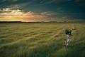 Картинка поле, природа, велосипед, вечер, bike