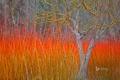 Картинка осень, трава, дерево, Испания, Куэнка