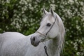 Картинка морда, конь, лошадь, грация, (с) OliverSeitz