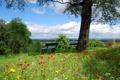 Картинка лето, цветы, скамя