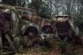 Картинка car, woods, walking dead