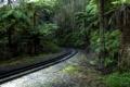 Картинка железная дорога, деревья, Тропический лес