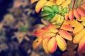 Картинка осень, листья, природа, краски, фокус, colors, nature